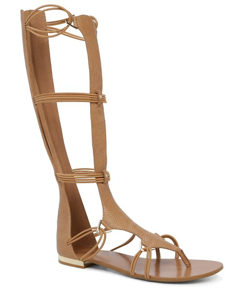 ALDO Miracia in camel - A tall and versatile gladiator sandal cast in an urban...