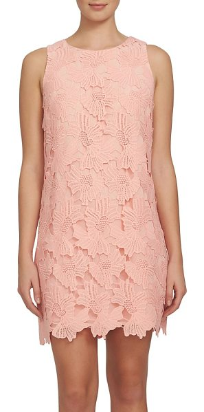 CeCe by Cynthia Steffe arlington lace shift dress in peach poppy - The little lace dress is fresh for the season with this...